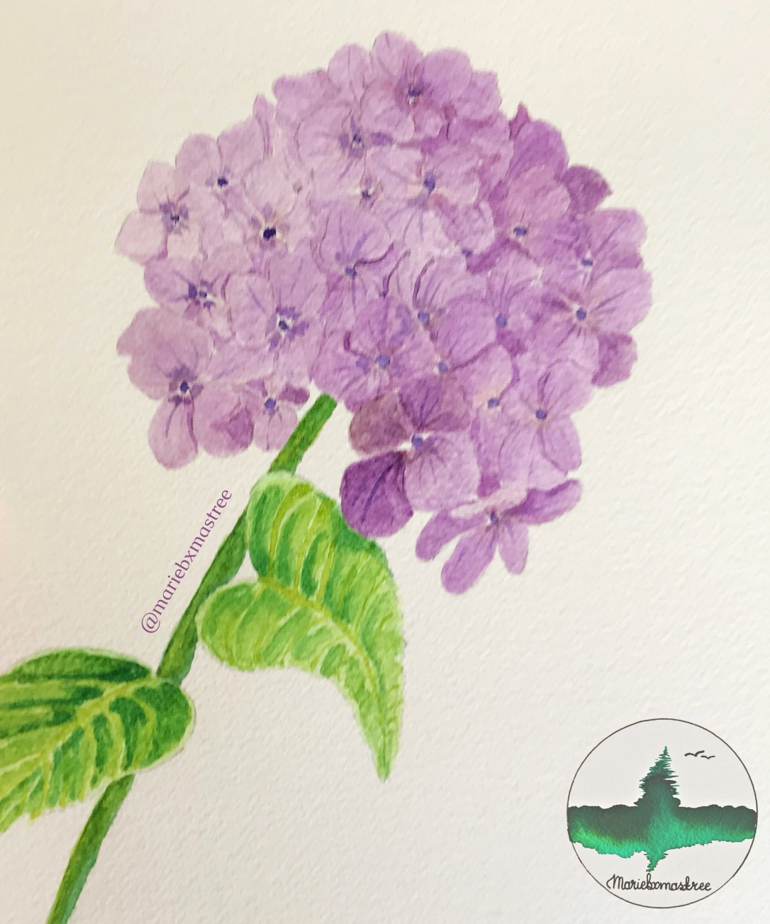 Watercolour Hydrangea. Watercolor painting. Artist: mariebxmastree