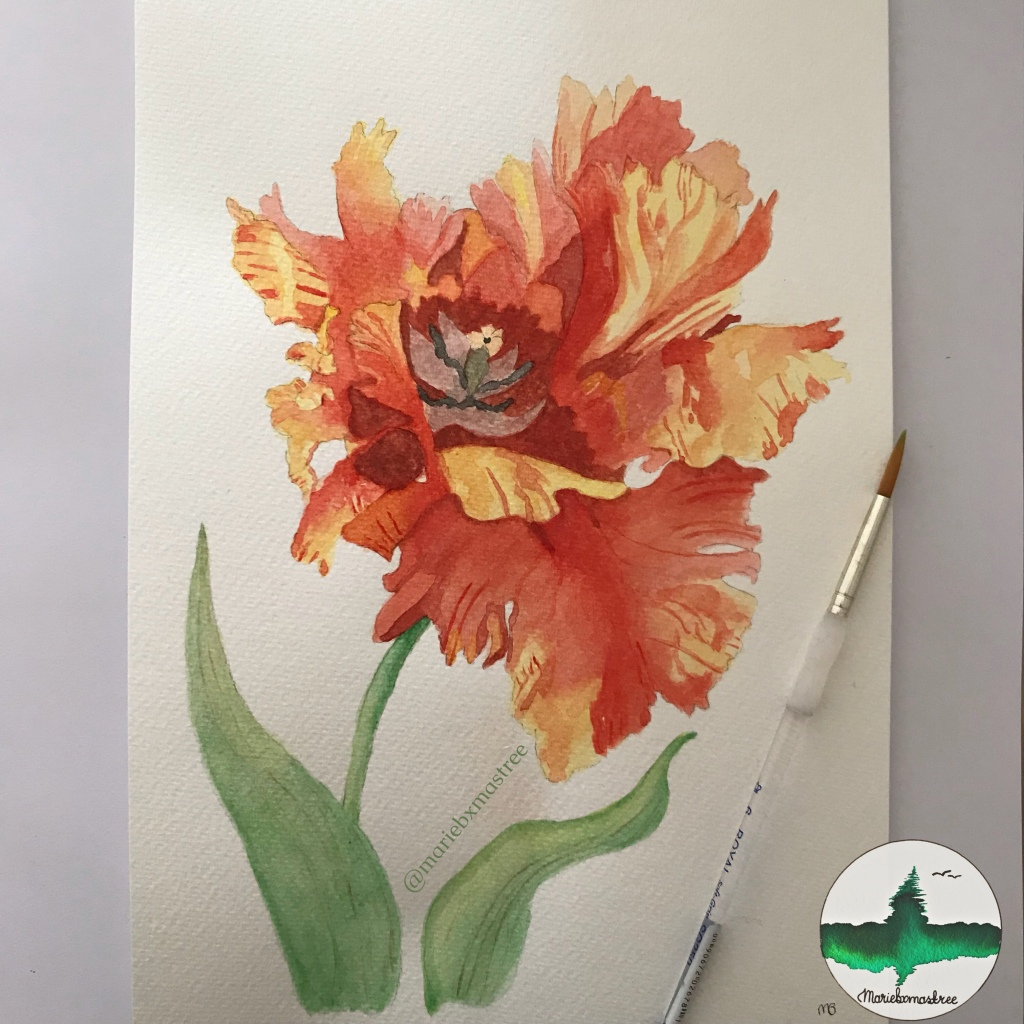 Watercolour Tulip Watercolor painting. Artist: mariebxmastree