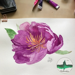 Pink and Purple watercolour Peony painting