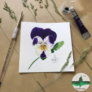 Watercolour painting of purple and white pansy flower